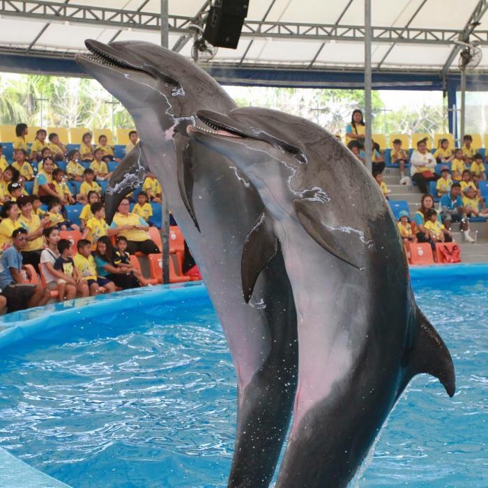 Phuket Meet Dolphins Show