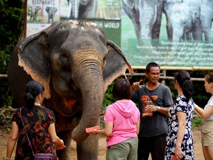 Elephant Jungle Sanctuary Phuket : Elephant Feeding and Showering