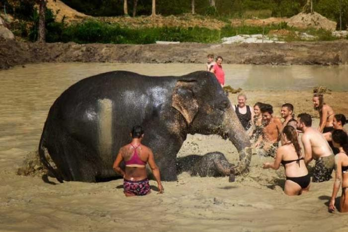 Elephant Jungle Sanctuary Phuket : Walk with Elephant (6 hour)