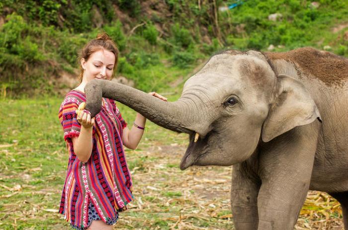 เขตรักษาพันธุ์ช้างเอเลเฟ่น จังเกิล แซงชัวรี : สปาโคลนและดูแลน้องช้าง