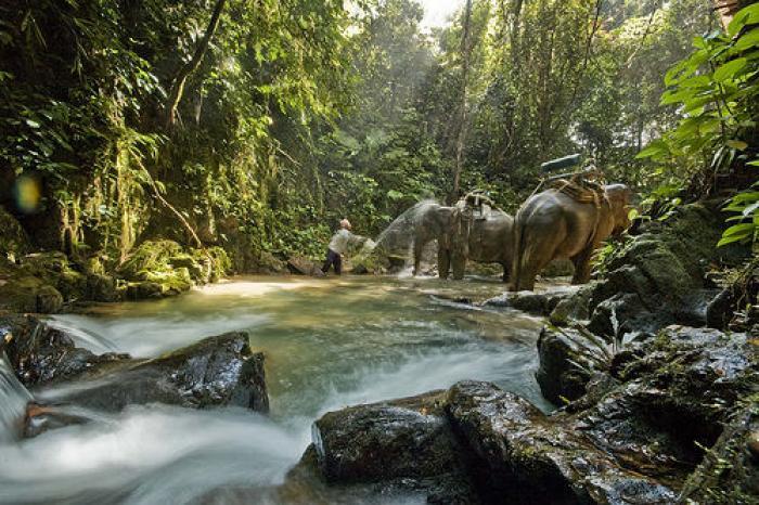 ผจญภัยท่ามกลางขุนเขาแห่งป่าฝน ล่องแพ + นั่งช้าง (S0214)