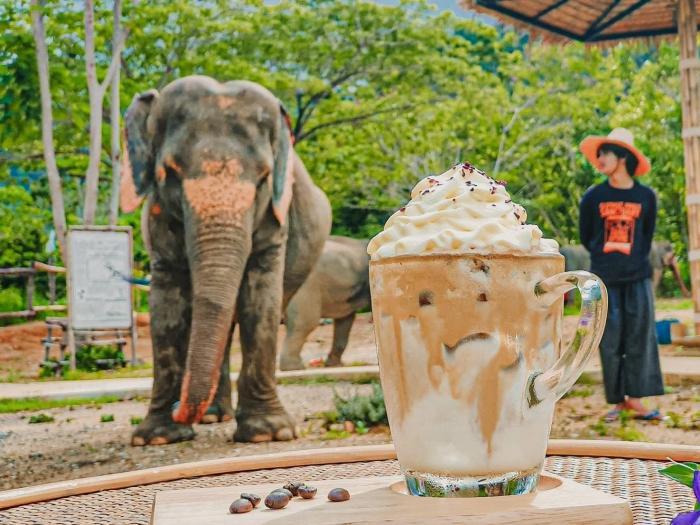 เขตรักษาพันธุ์ช้างเอเลเฟ่น จังเกิล แซงชัวรี : ป้อนอาหารน้องช้าง