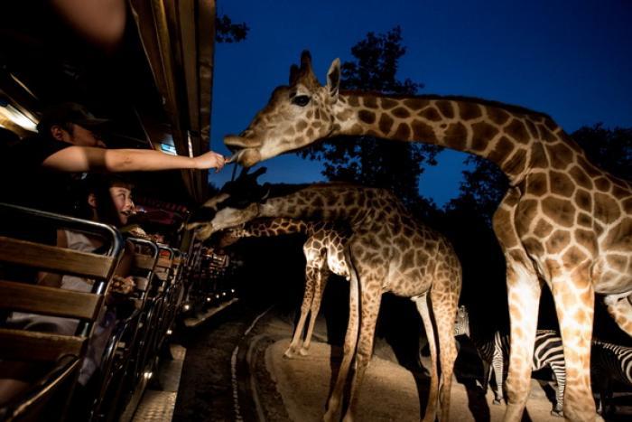 เชียงใหม่ไนท์ซาฟารี : เดินชมและนั่งรถชมสัตว์เวลากลางคืน